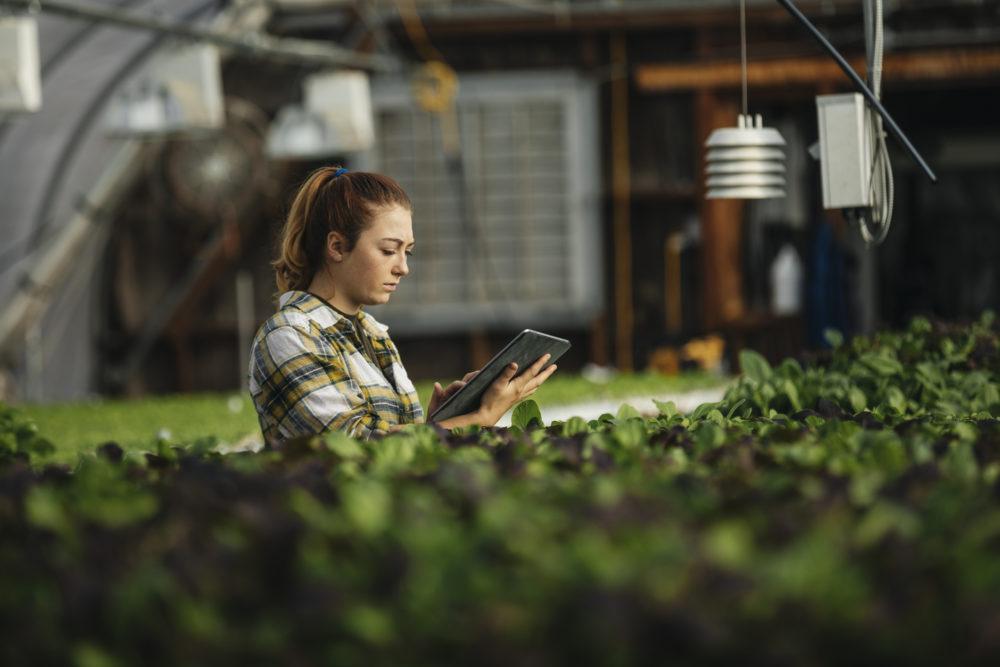 kobieta pracująca przy hodowli roślin, w dłoniach trzyma tablet